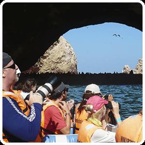 Ballestas Islands Paracas Tour