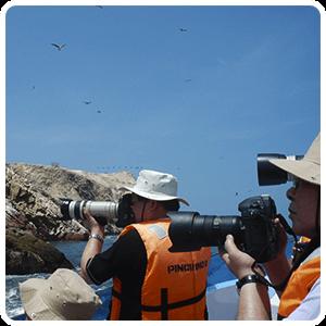 Birdwatching in Ballestas