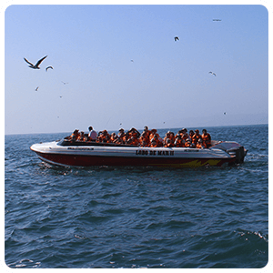 Boat excursion to the Ballestas