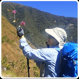 Inca Trail flora