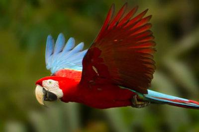 Tour to Tambopata Rainforest