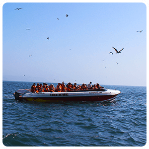 Boat Tour to the Ballestas Islands