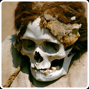 Chauchilla bleached skull