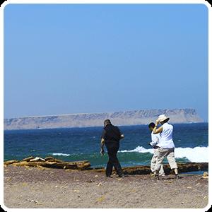 Excursion to the Paracas Beach