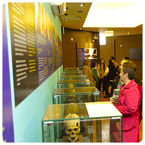 Guided tour to the Museum of Archaeology