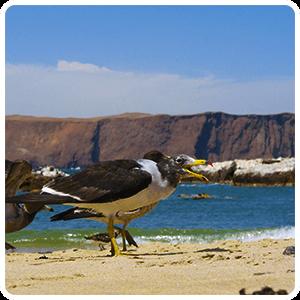 Lagunillas Beach Paracas
