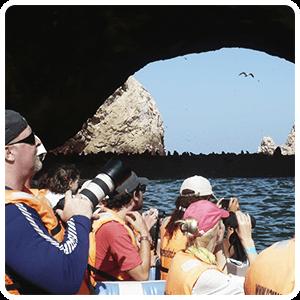 Sea lions beach at the Ballestas Islands