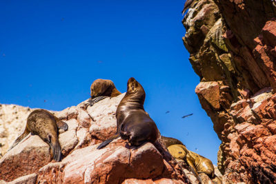 Tour to the Ballestas Islands